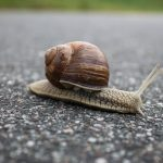 Slow WordPress Dashboard and How To Fix It